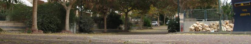רחוב השקד
